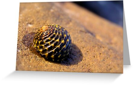 Tiger Shell by Michelle Ricketts