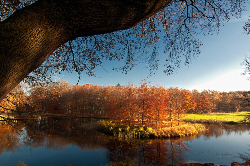 Autumn 14nov12 by THHoang