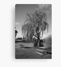 Willow park Canvas Print