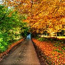Autumn Road by NeilAlderney