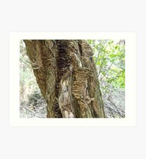 Tree Stories Art Print