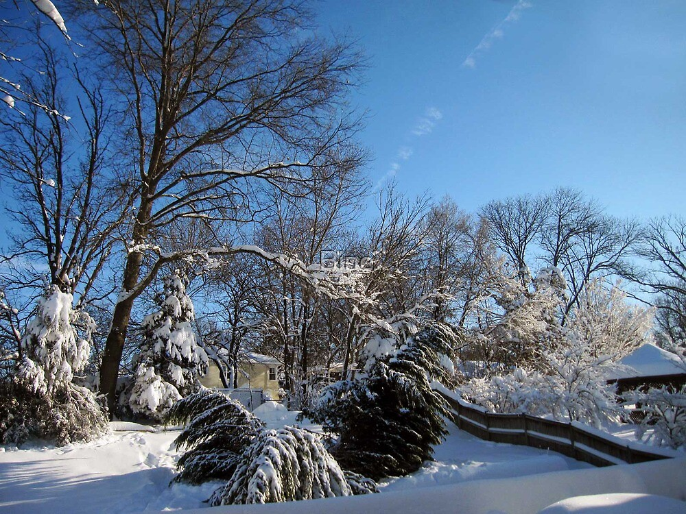 Our Backyard During Wintertime by Bine