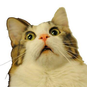 gato molesto de carlac