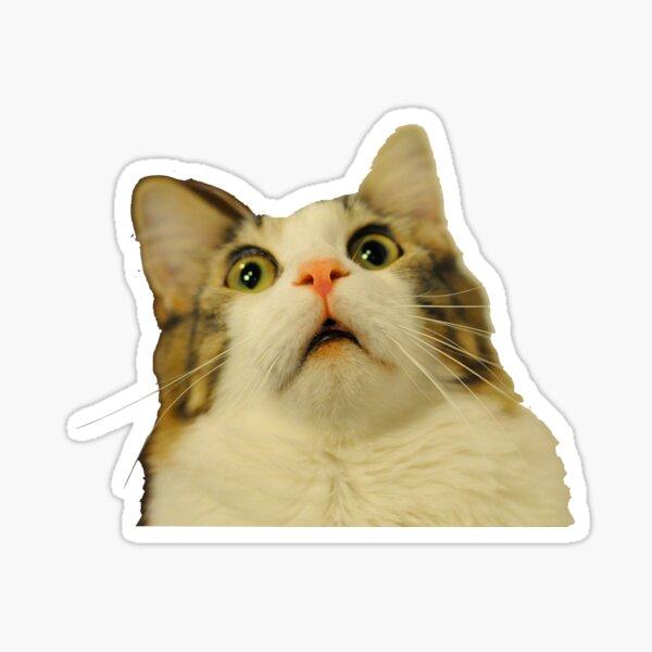 upset cat  Sticker