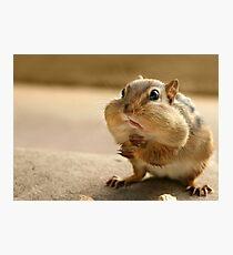 """Who me?  I didn't take the peanuts!"" Photographic Print"