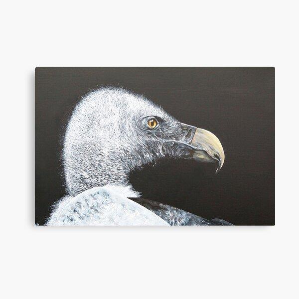 Vulture Canvas Print
