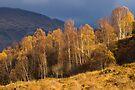 Light in Glen Lyon, Perthshire, Scotland by Cliff Williams