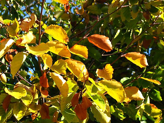 Glorious Autumn Leaves by BlueMoonRose