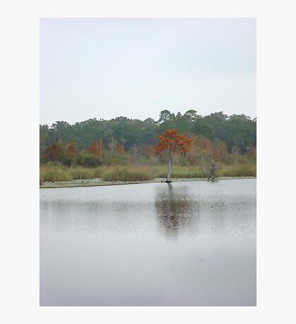 BEAR CREEK CYPRESS ON A GLOOMY DAY Photographic Print