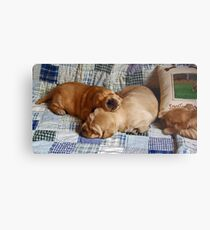 pups! Metal Print