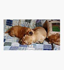 pups! Photographic Print