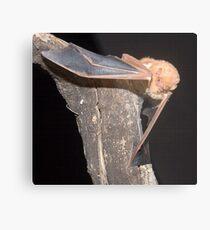 Red bat portrait Metal Print