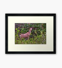 Scraggly Muley Framed Print