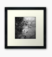 lakeside creatures Framed Print
