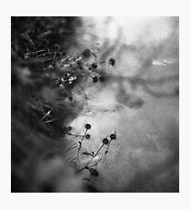 lakeside creatures Photographic Print