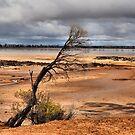 Salt Lake Western Australia by Bev Woodman