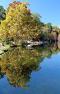 Beavers Bend Paddle Boat Rental by Carolyn  Fletcher
