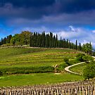 Vineyard in Tuscany by vivsworld