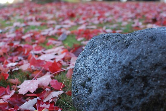 Rockin Leaves by Payne24
