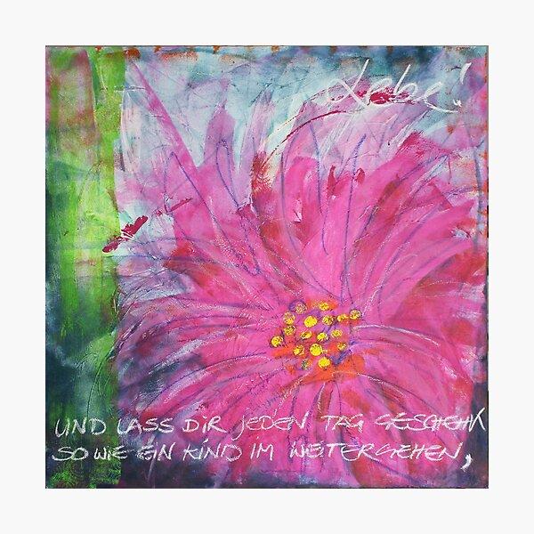 Frühlingserwachen: »pink daisy« Fotodruck