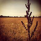 Wisconsin Prairie by Josrick