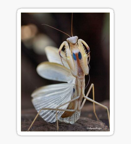 """ELEGANCE"" IN CAPTURE - The praying mantis Sticker"