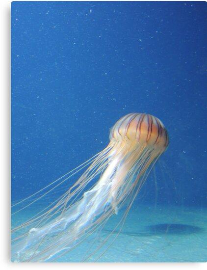 Jellyfish by CreativeEm