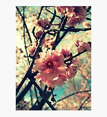 Vintage Blooms Photographic Print