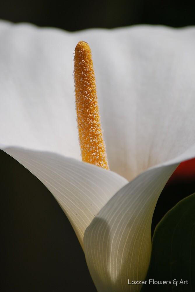Fine in White by Lozzar Flowers & Art