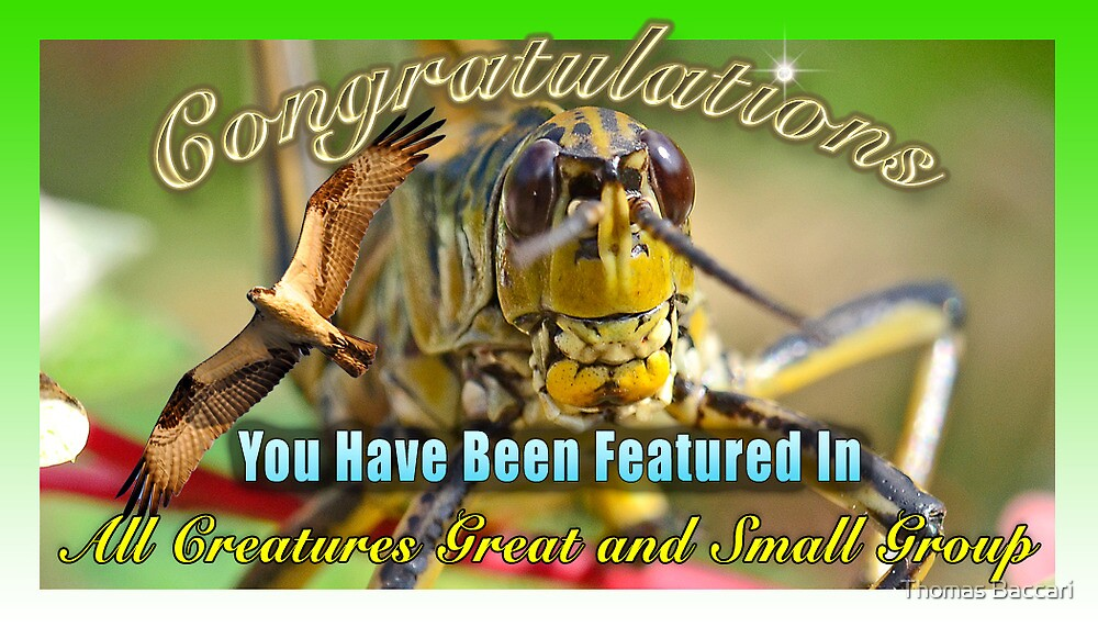 Feature Banner for All Creatures Great and Small by TJ Baccari Photography