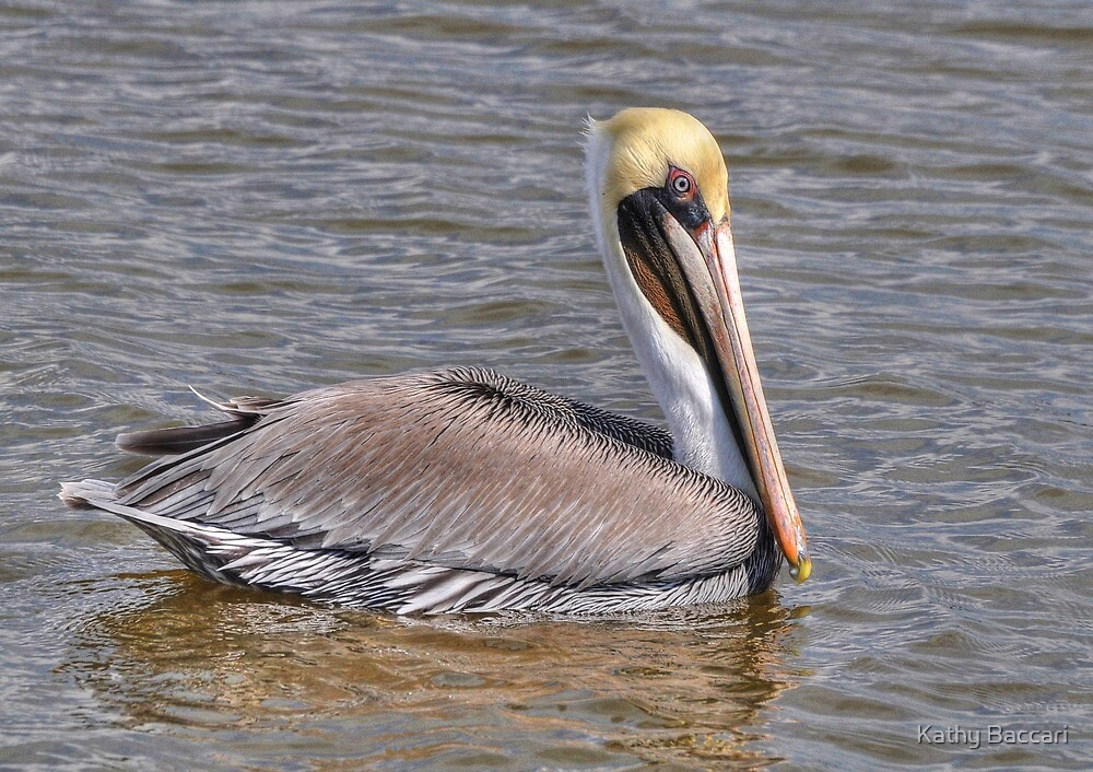 Male Brown Pelican by Kathy Baccari
