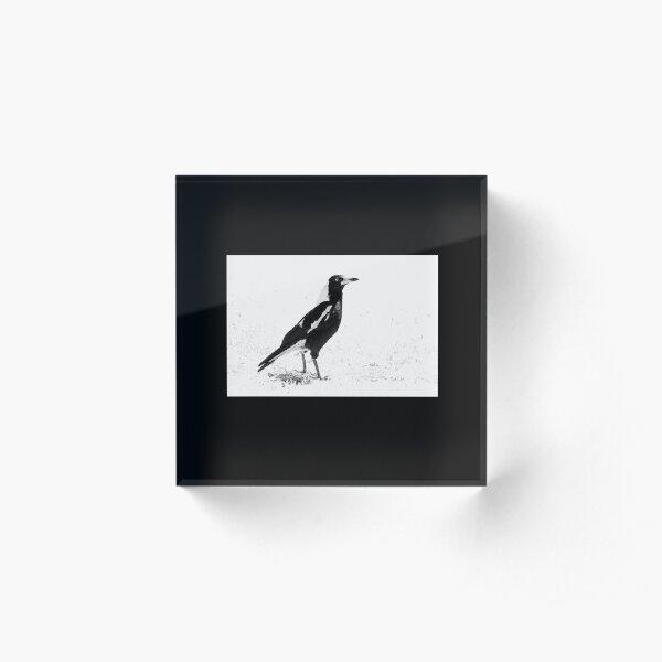 Magpie Bird, Black and White Art, Bird Artwork Acrylic Block