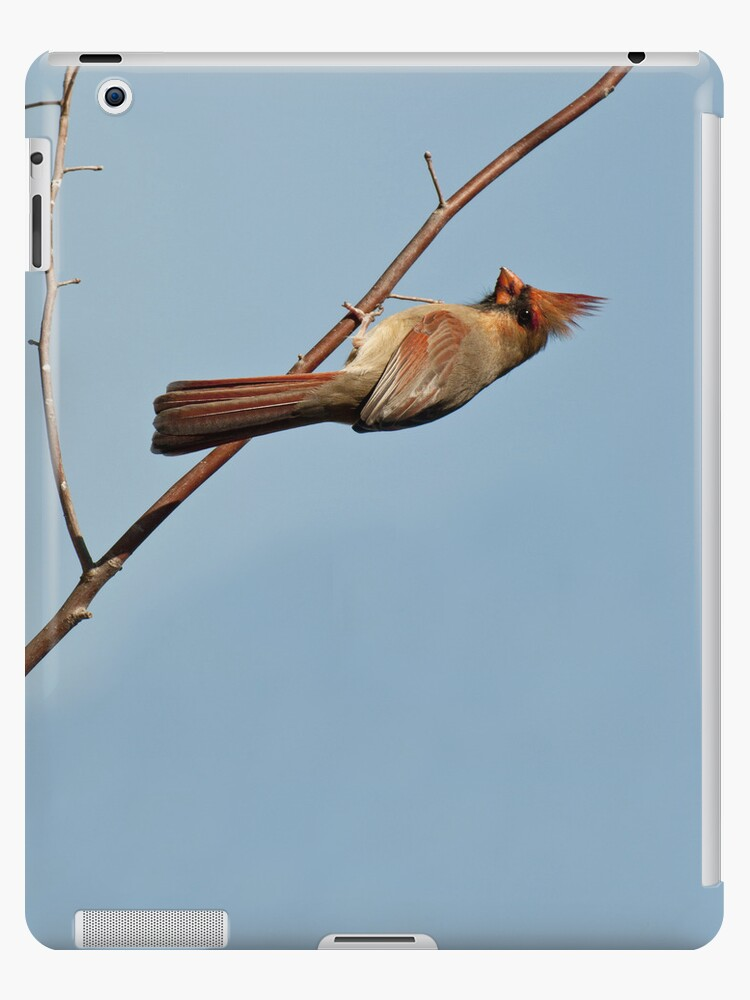 Female Cardinal IPad Case by barnsis