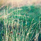 Calm Fields of Green by MissMoll