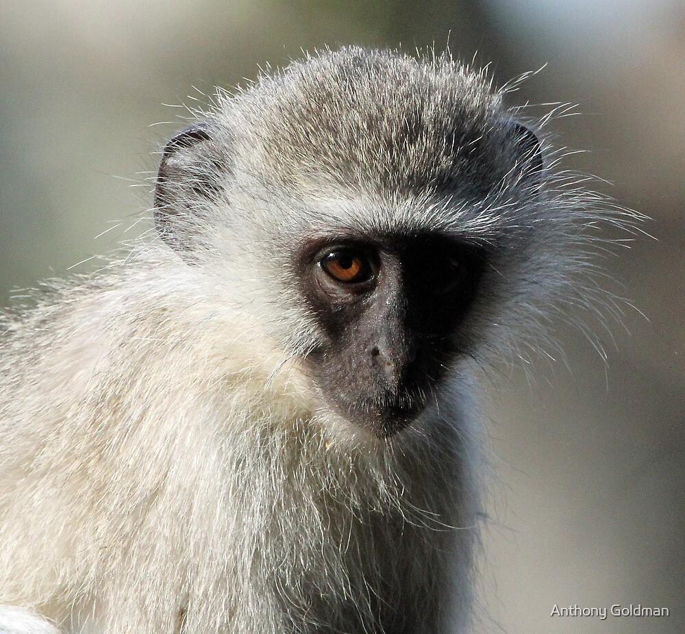Monkey business-showing my dark side! by jozi1