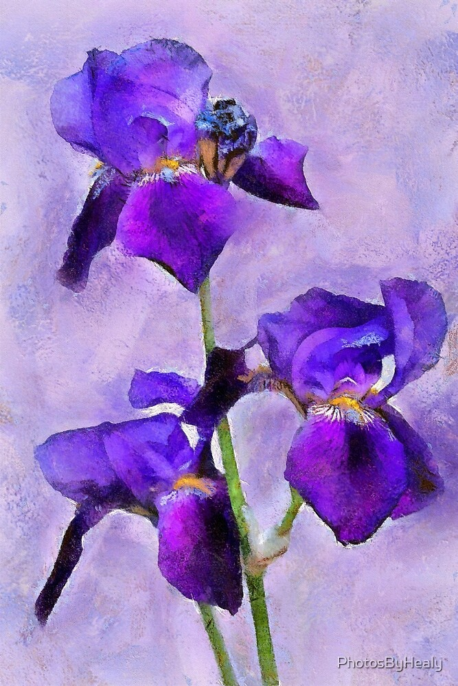Purple Irises - painted by PhotosByHealy