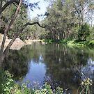 Freshwater! Tallebudgera Creek, Tallebudgera Valley, QLD. by aussiebushstick