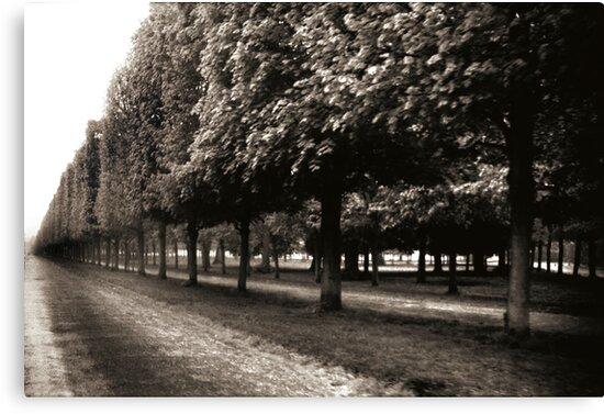 Tree Line by A. Duncan