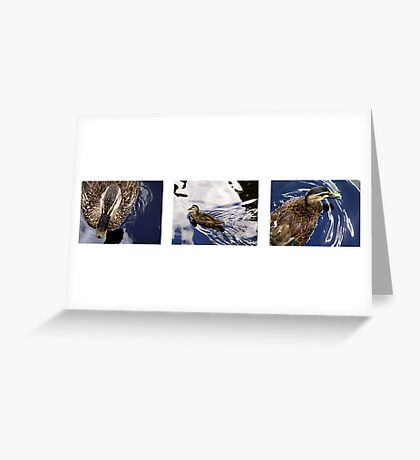 Duck Triptych Greeting Card