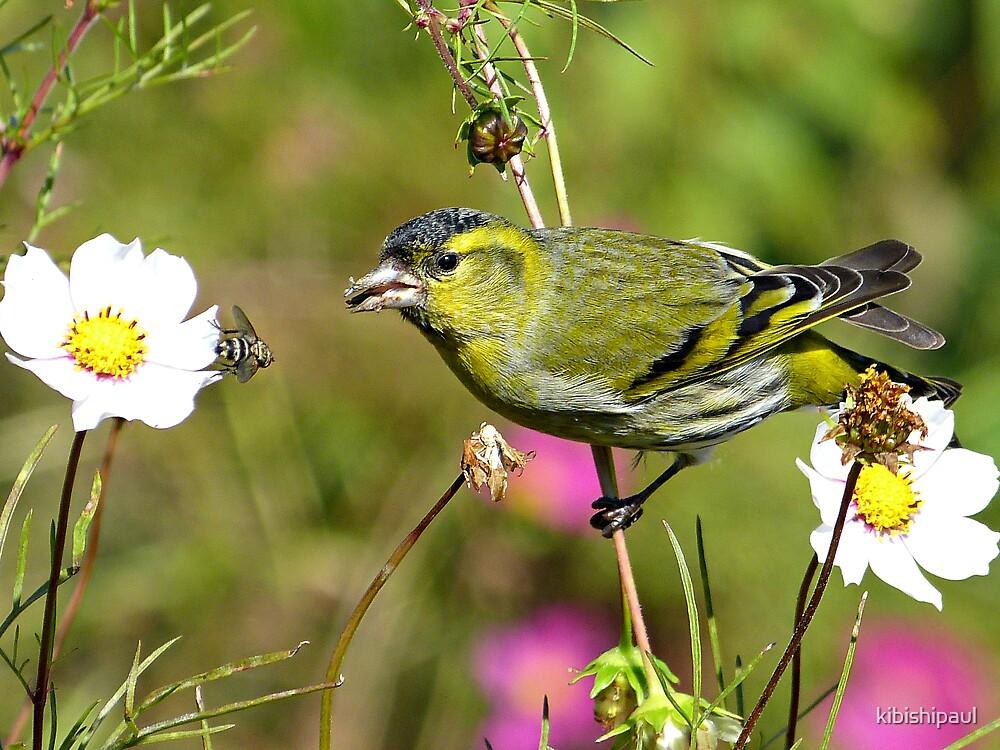 Buzz Off Birdbrain by kibishipaul