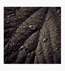 wet leaf Photographic Print