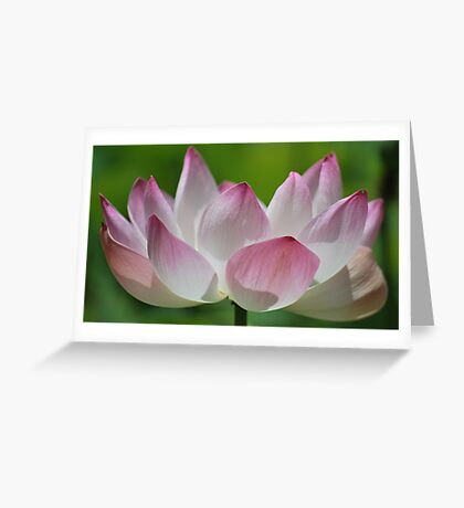Opened Beauty Greeting Card