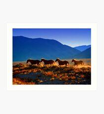 Mustang Trail Art Print