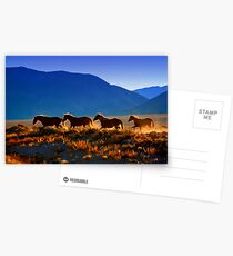 Mustang Trail Postcards