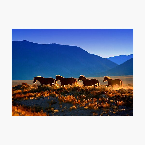 Mustang Trail Photographic Print