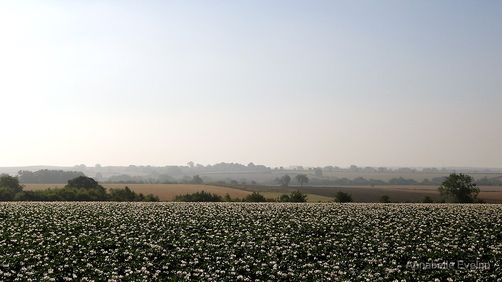 Potato fields, Lincolnshire by Annabelle Evelyn