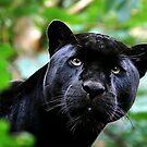 Black Jag by Stuart Robertson Reynolds