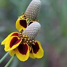Mexican Hat by Jazzy724