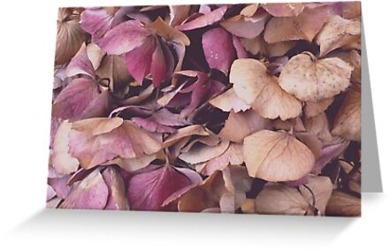 Hydrangea (Available in iPhone, iPod & iPad cases) by Jess Meacham