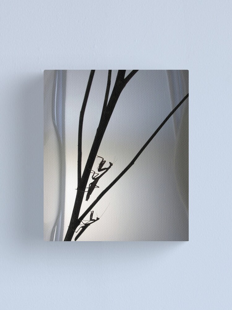 Alternate view of Mantis Silhouette  Canvas Print